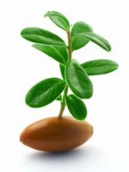 росток станвится сильным кустом